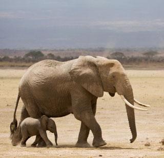 elephantsinthewild