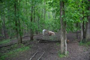 pig preserve kirschner's korner
