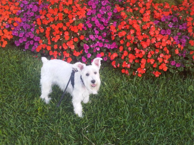 Pretzel flowers