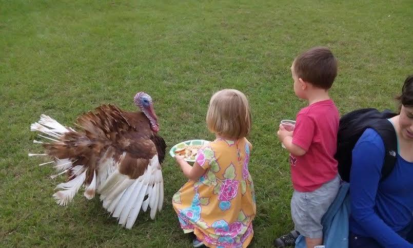 Children meet Thomas, a rescued turkey at CJ Acres Animal Rescue Farm