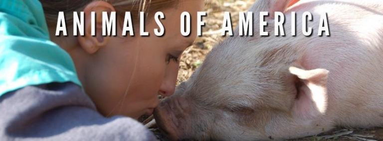 Animals of America Profile