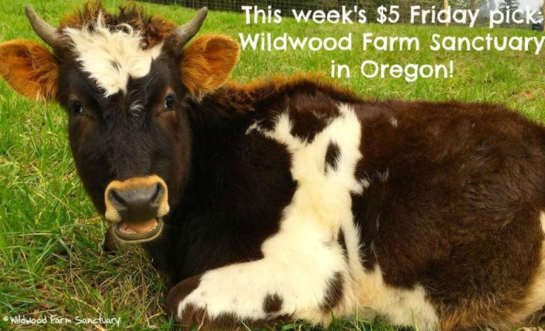 $5 Friday Pick Wildwood