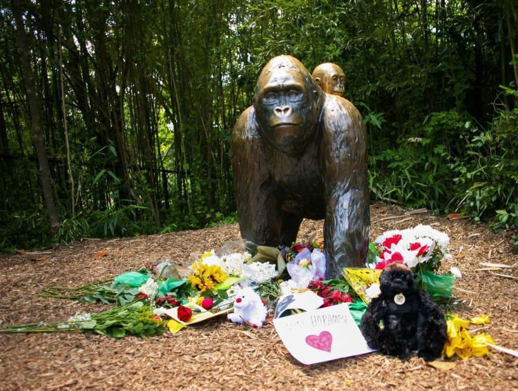 ohio-gorilla